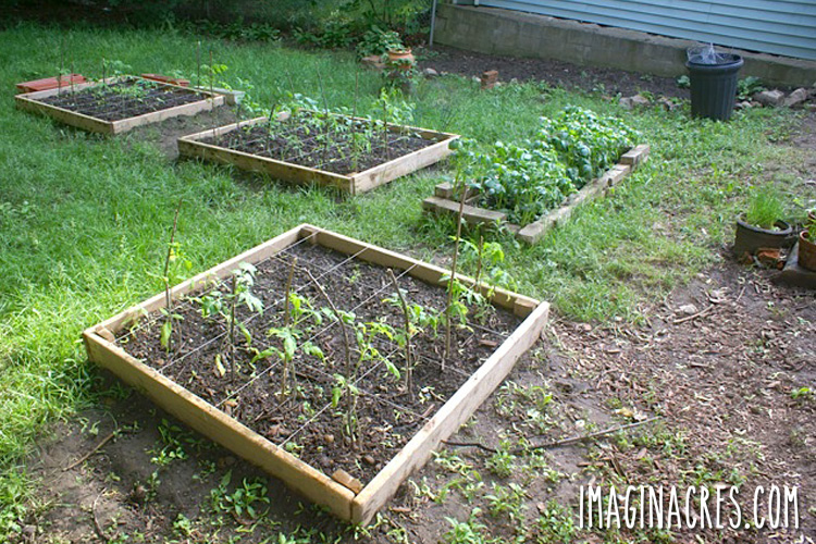 raised garden beds on green grass