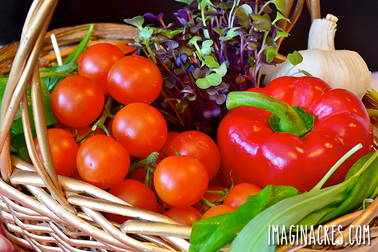 harvest basket filled with tomatoes, peppers, and herbs