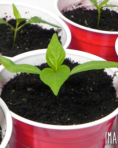 Don't waste your money on purchasing new seed starting systems and pots each year! You can pull containers out of the recycle bin and use them for starting seeds. It's free, easy, and works! Here are eight recycled seed starting container ideas to get you started.