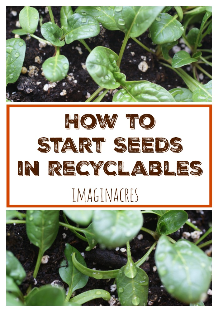 Starting seeds indoors can get expensive real quick. Cut down on some of those expenses by using recyclables to start your seeds!