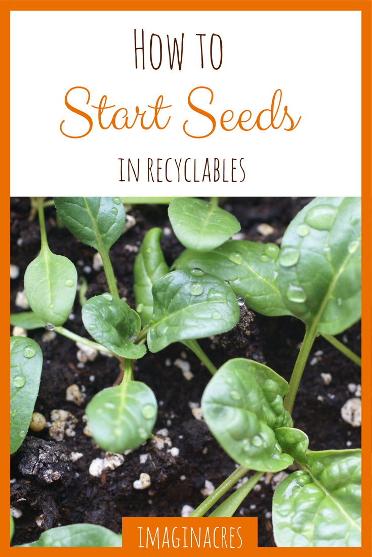 Don't waste your money on seed starting systems! You can pull containers out of the recycle bin and use them for seed starting. It's free, easy, and works!