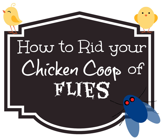 get rid of flies in your chicken coop