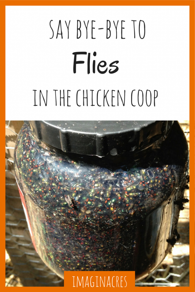 Do you have flies in your chicken coop? We've found several ways to get rid of flies in the chicken coop for good!