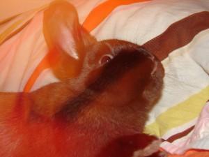 A Bunny Story