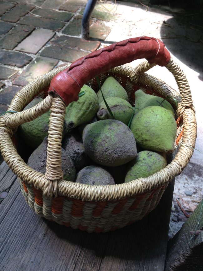 black walnuts in basket