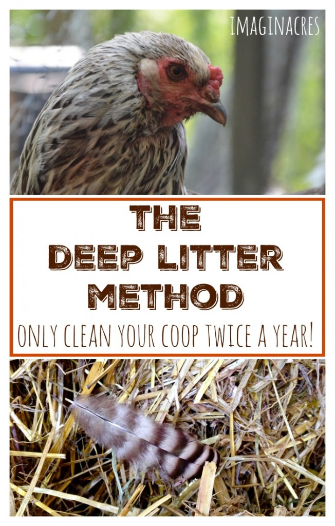 The deep litter method is so easy, so cheap, and you only have to clean the coop twice per year!