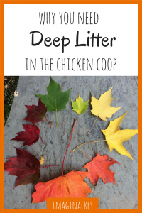 Using the deep litter method in the chicken coop is easier, cheaper, and healthier for your chickens. Why not start today?