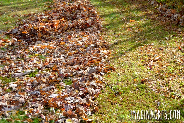 a pile of fall leaves on the ground