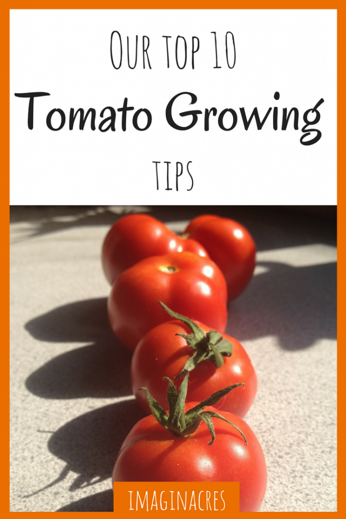 Growing tomatoes can be difficult, but with these 10 easy to understand tips, you'll be an expert in no time!