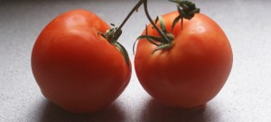 10 Tomato Growing Tips Easy to Understand