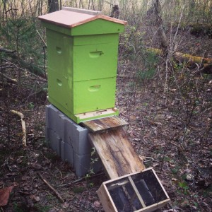 bee hive in the woods
