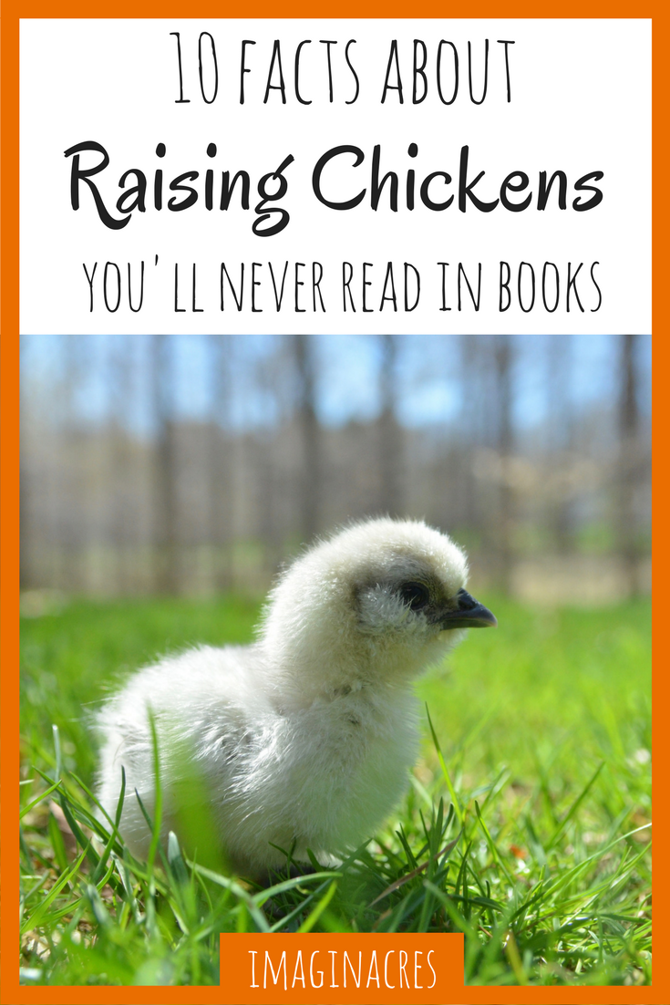 When we started raising chickens we read every book and website we could get our hands on. We thought we knew everything there was to know about chickens. We were wrong.
