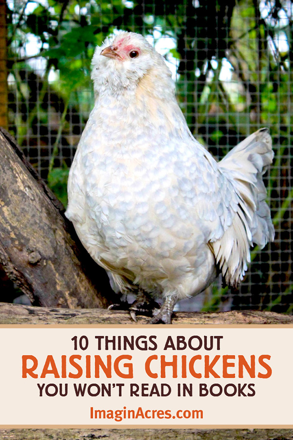 As new backyard chicken owners, we discovered that book knowledge and research didn't explain everything. Learn 10 unexpected things about raising chickens.