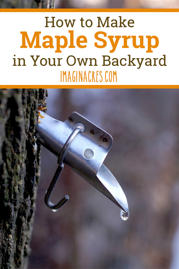 Do you have maple trees on your property? If so, with a just a few basic supplies and plenty of time you can be making maple syrup right in your own backyard in spring.