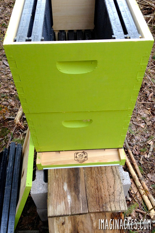 See what to do (and what not to do) when getting ready for your first beekeeping adventure.