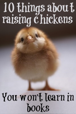 10 things about raising chickens they won't tell you in books
