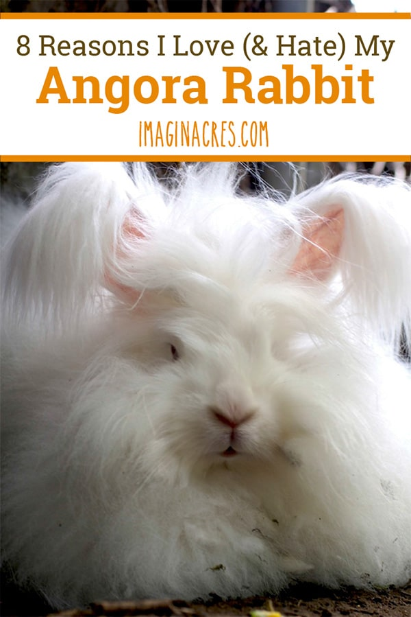 Rabbits make wonderful pets. They have lots of energy and personality. Owning a rabbit is very different from owning a cat or dog. Here are some reasons I love my Angora rabbit, and reasons I don't.