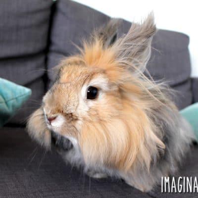 8 Reasons Why I Love (and Hate) My Angora Rabbit