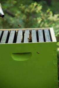 Honey bees arrive at ImaginAcres
