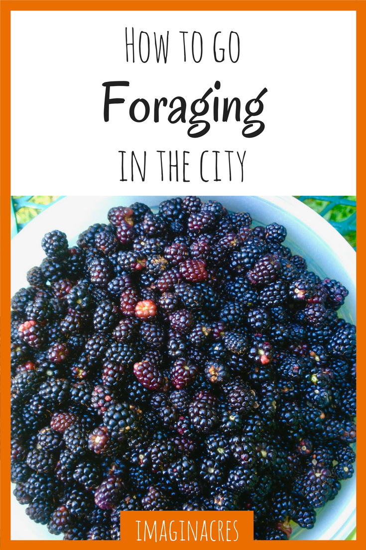 Foraging in the city is easy and fun. There's lots of wild food growing right in your backyard!