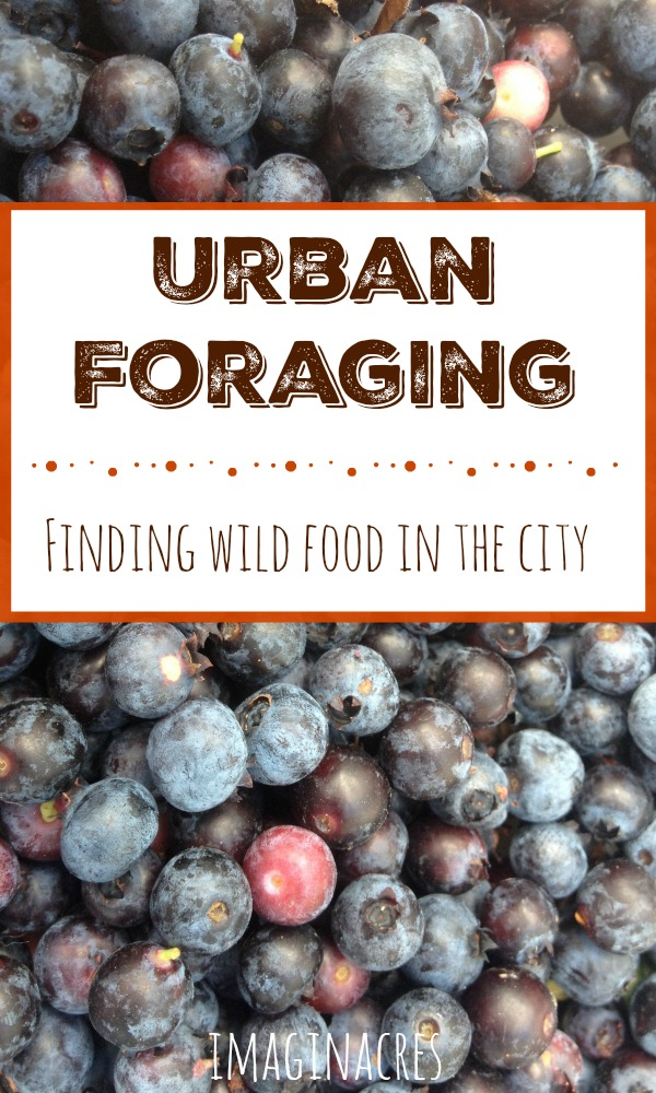 We foraged hundreds of pounds of food from our city, all for free!