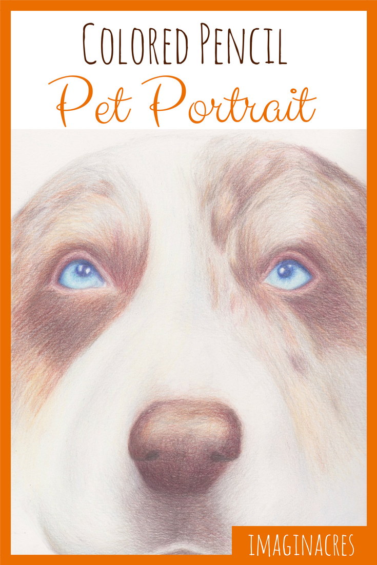 See how I created a colored pencil pet portrait of my dog Nico, step by step.