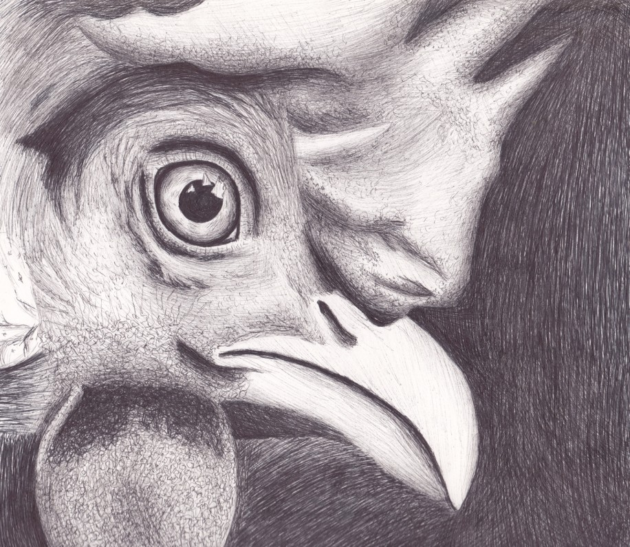 I love our chickens, and adore capturing their spirit, whether it's through the camera lens or illustration. This pen and ink chicken illustration is of one of our leghorn's, appropriately named Foghorn.