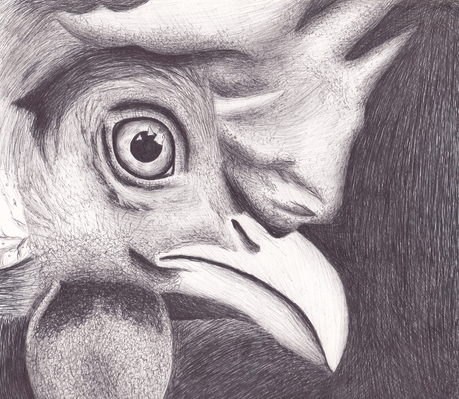 Poultry in Pen and Ink