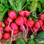 radishes in a basket at a farmers market
