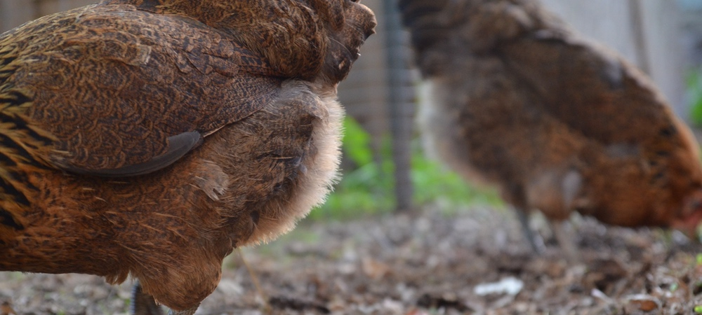 Flock Photos: Summer Series