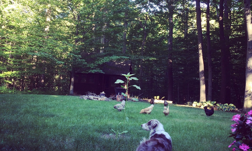 Our New Woodland Homestead!