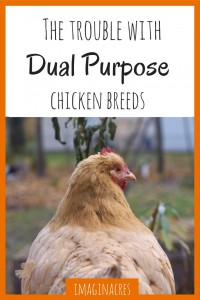 Dual Purpose chicken breeds sound great at first, eggs and meat from one bird? What could go wrong? Well, we're here to tell you...
