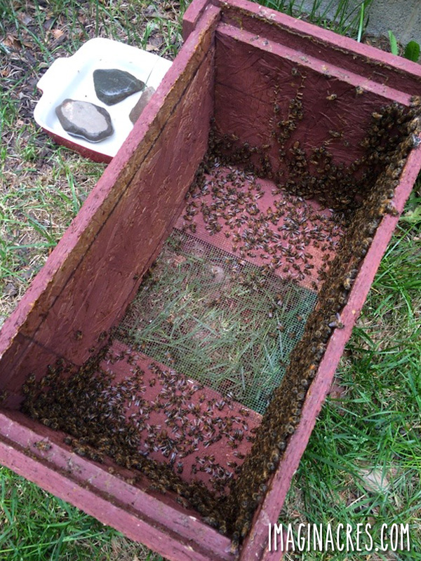 bee nuc box with frames removed