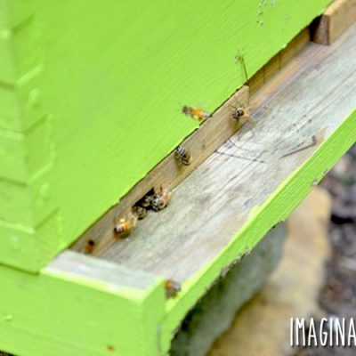 Honey Bees Arrive at ImaginAcres (part two)