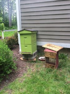 Our experience installing a bee nuc was interesting, beautiful, and scary all at once.