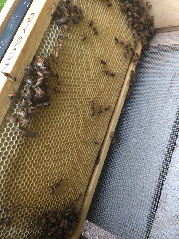 Our experience installing a bee nucleus was interesting, beautiful, and scary all at once.