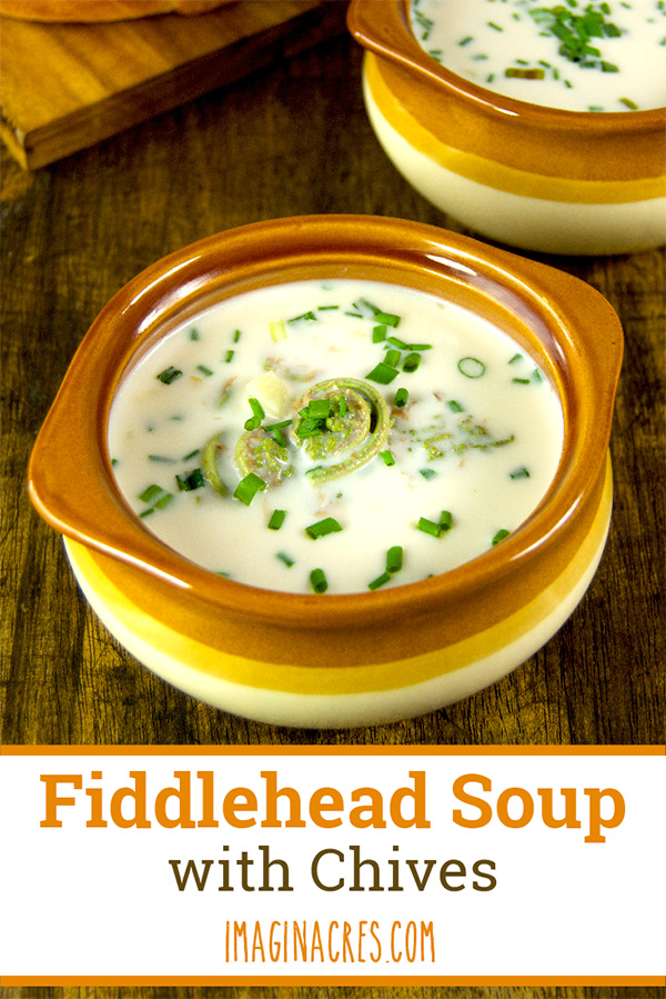 Creamy Fiddlehead Soup with Chives: This chowder like, soup takes advantage of the early spring harvest of ostrich fern fiddleheads and chives as they emerge from their winter slumber.