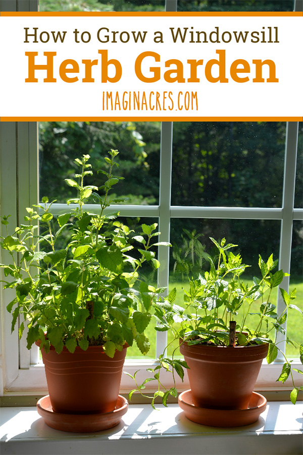 A windowsill herb garden is a low-maintenance way to enjoy the benefits of fresh herbs without growing an outdoor garden. Read on to learn how to set up a windowsill herb garden.