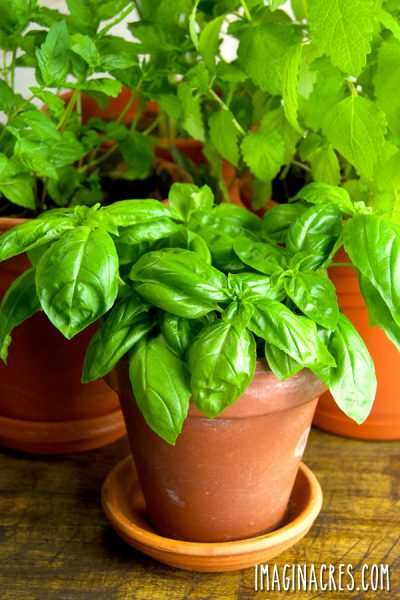 You don't need a garden to grow fresh herbs. Growing an indoor herb garden makes it easy to snip fresh foliage to flavor meals whenever you need them.