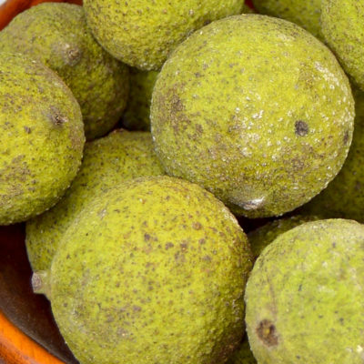 How to Harvest and Preserve Black Walnuts
