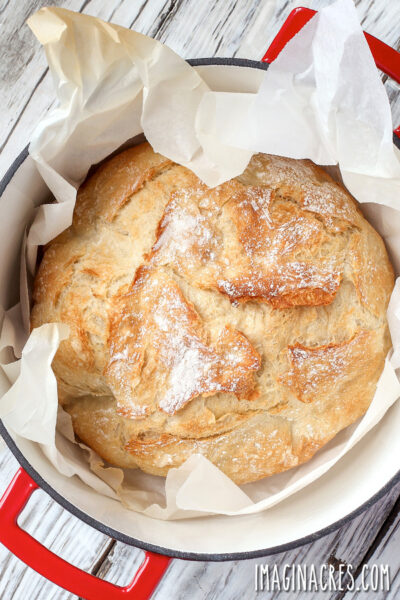 overhead photo of baked no knead bread in a red dutch oven